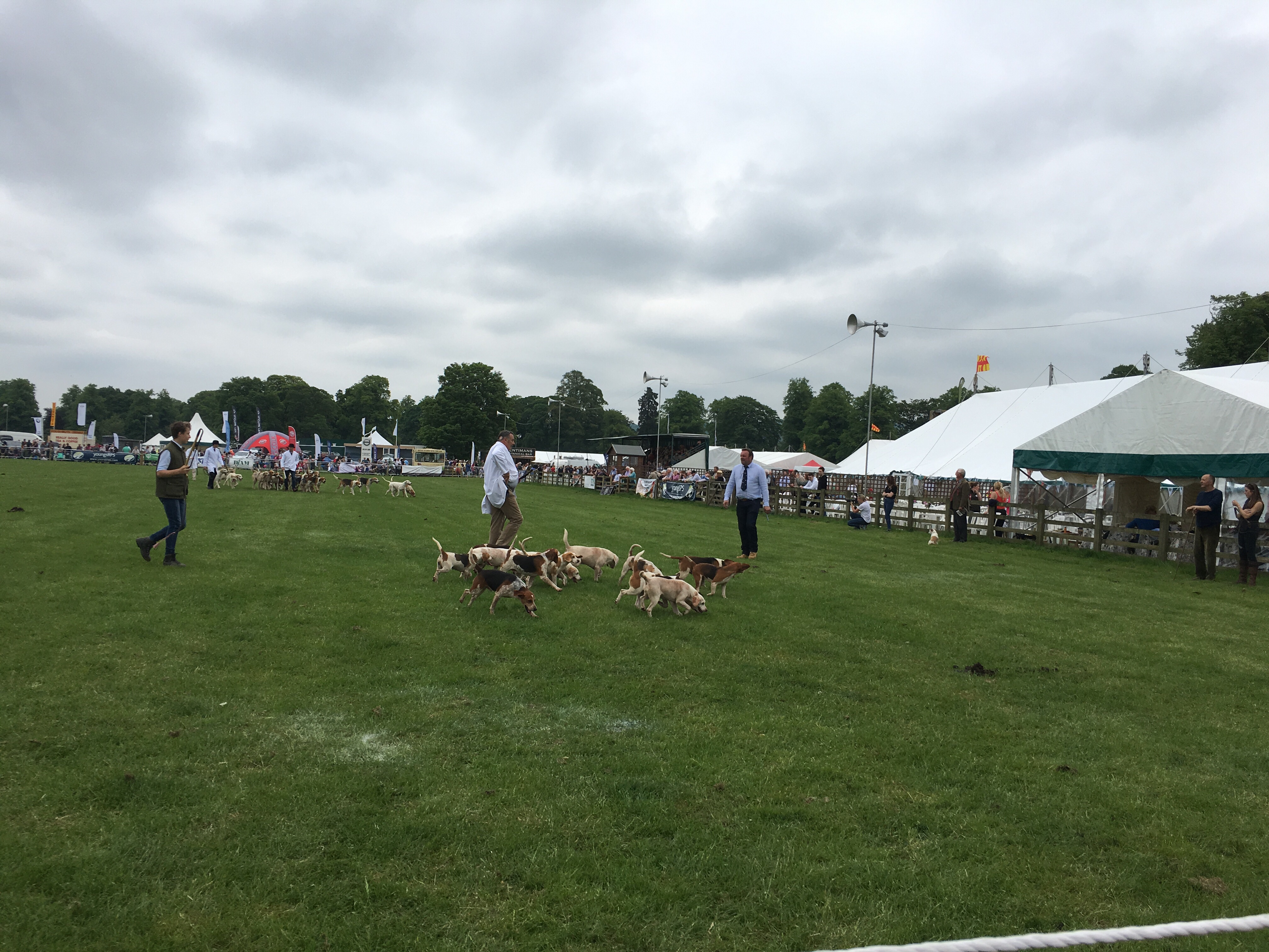 The traditional fox hounds and beagles at the Northumberland County Show